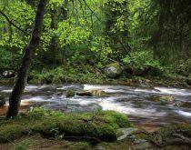A importância do Estudo de Impacto Ambiental (EIA)
